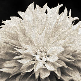 Dahlia In Monochrome by Evelyn Odango