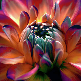 Julie Palencia - Dahlia Multi Colored Squared