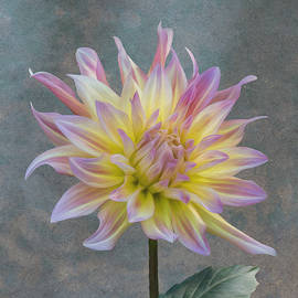 Patti Deters - Dahlia - Pink and Yellow