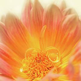 Patti Deters - Dahlia Series #1/5