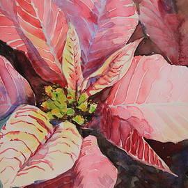 Daily Poinsettia #3 by Marsha Reeves