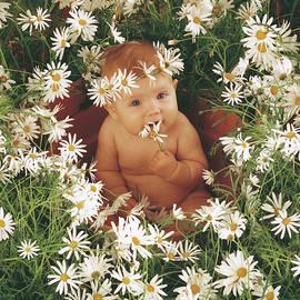 Daisies - Fine Art
