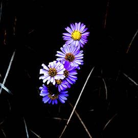 Daisies In Purple by Lorraine Devon Wilke