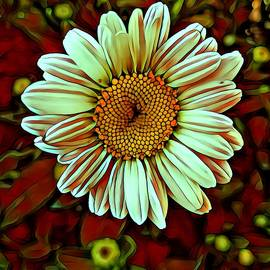 Sathya Arumugam - Daisy flower with brown background