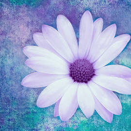 Daisy on Textured Background by KaFra Art