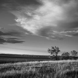 Steven Bateson - Dakota Grassland Black and White
