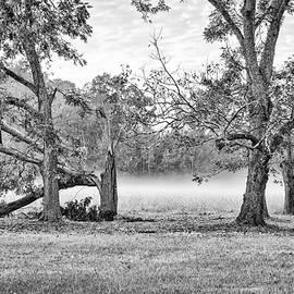 Dale - Foggy Morning
