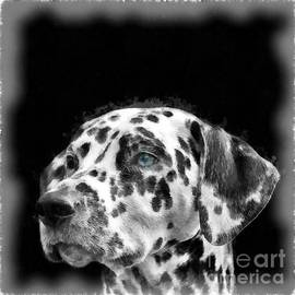 Dalmatian Dog Watercolor - Edward Fielding
