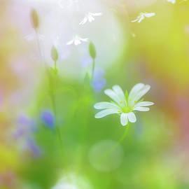 Sarah-fiona Helme - Dance of the Nature Spirits