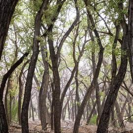 Mary Lee Dereske - Dance of the Trees
