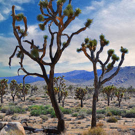 Dancing Joshua's - Joshua Tree National Park by Glenn McCarthy
