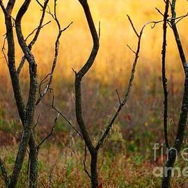 Randy Pollard - Dancing Trees
