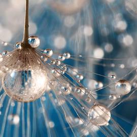 Sharon Johnstone - Dandelion Blue Sparkling Drops