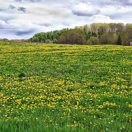 Dandelion Field With Barn by Lise Winne