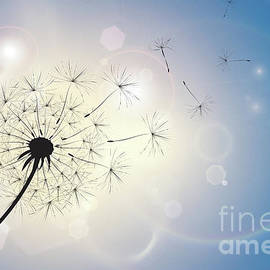 Jane Rix - Dandelion in a summer breeze