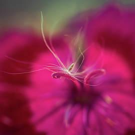 Dandelion Seed by Danielle Silveira