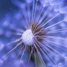 Alana Ranney - Dandelion Wish