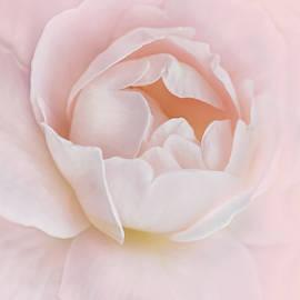 Danielle's Pink Rose Flower by Jennie Marie Schell