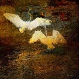 Danse Aigrette by Brent Groves