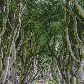 The King's Road by Andrew Wilson