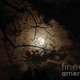 Maureen Tillman - Dark Night, Bright Moon