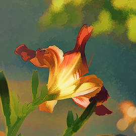 Linda Brody - Dark Red Day Lily with Sun Shining Through I Abstract I