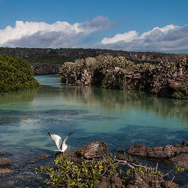 Darwin Bay     Genovesa Island      Galapagos Islands by NaturesPix