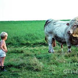 David and the Big Charolais Bull by Kim Lessel
