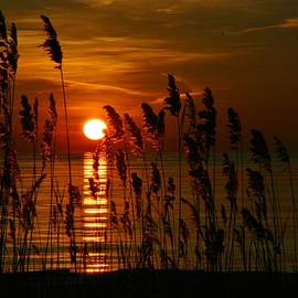 Linda McAlpine - Dawn at the Beach