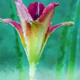 Terry Davis - Day Lily A La Monet