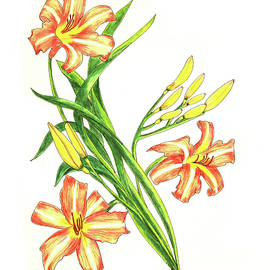 Laura Wilson - Day Lily One