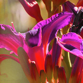 Brooks Garten Hauschild - Daylily Abstract Colors - Beauty in the Garden