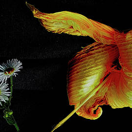 Mark Victors - Daylily and Daisy