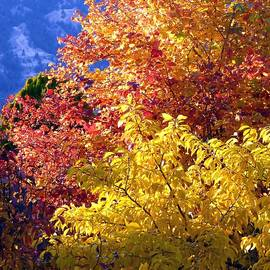 Will Borden - Days Of Autumn 4