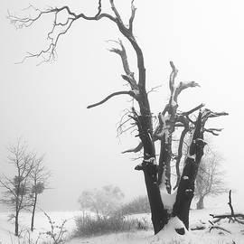 Dead Oak in Snow by Alexander Kunz