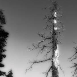 Mark J Dunn -  Dead Tree