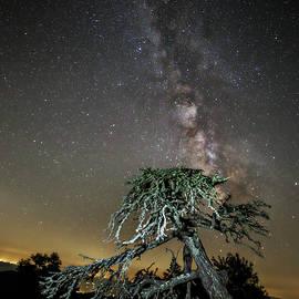 Doe Ridge Photography - Dead tree under the Milky Way