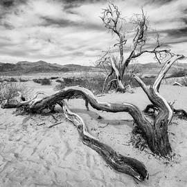 Death Valley #1 by Dave Schmidt