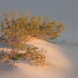 Bob Neiman - Death Valley Dunes 5414