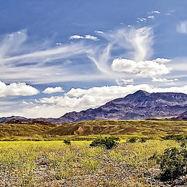 Death Valley Flower Field by Endre Balogh
