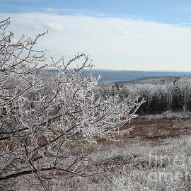 December 08 Crystal Landscape Ice Storm in New England by Maili Page