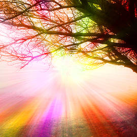 Thomas Woolworth - December Fog By The Sleepy Pin Oak Rainbow Burst