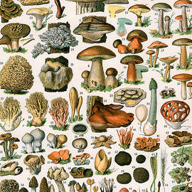 Decorative Print of Champignons by Demoulin