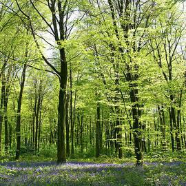 Alex Cassels - Deep in the bluebell Woods