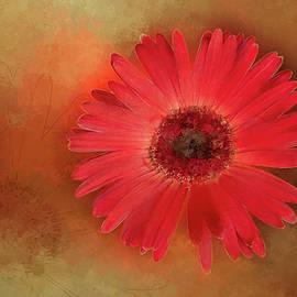 Terry Davis - Deep Shaded Daisy