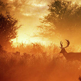 Deer in the mist by Roeselien Raimond