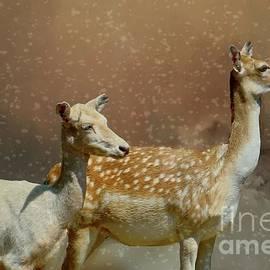 Janette Boyd - Deer in Winter