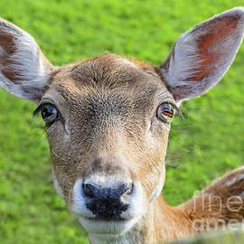 Sasha Samardzija - Deer