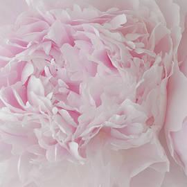 Sandra Foster - Delicate Pink Peony Flowers