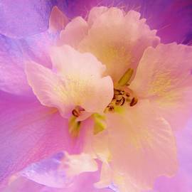Delphinium Abstract by Sharon Ackley